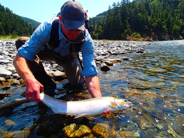 Wolf hooked the most adult steelhead for the camp...I lost count