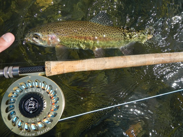 spey rods make fish look small