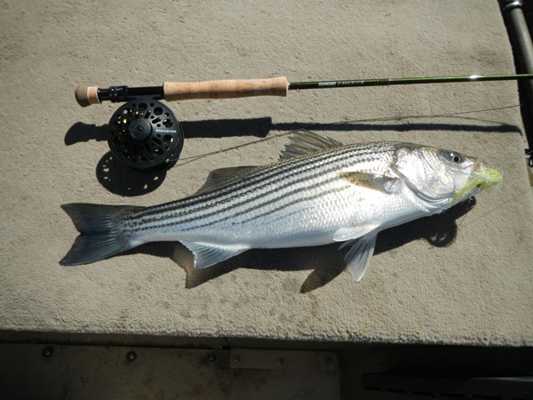 A stout fish