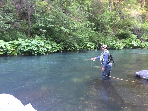 Jeff on a beautiful stretch of the Lower McCloud.  Fish rising just along the Elephant Ears!