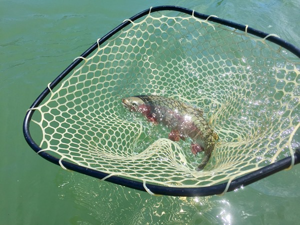 Big fish in a big net!