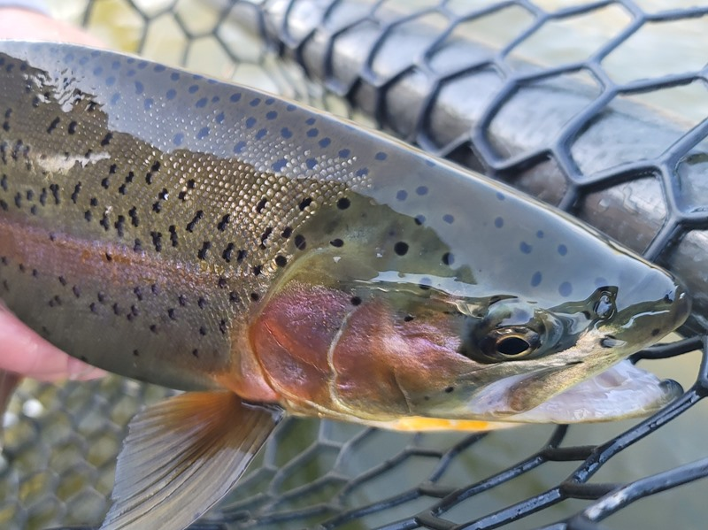 Feather River Fishing Image