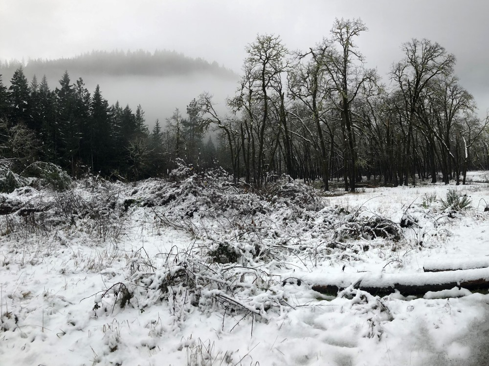 Snowy morning from one of the heaviest snowfalls during a winter steelhead season