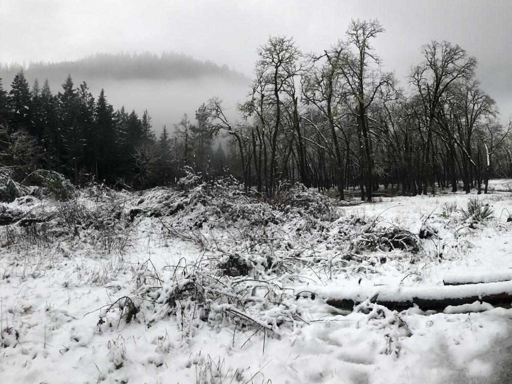 Snowy morning from one of the heaviest snowfalls during a winter steelhead season