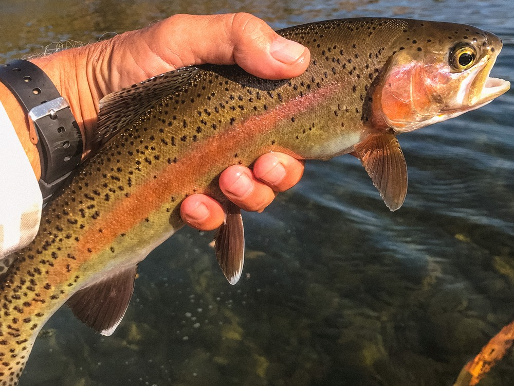 Kevin holding one of his guy's trout. Look at those colors!