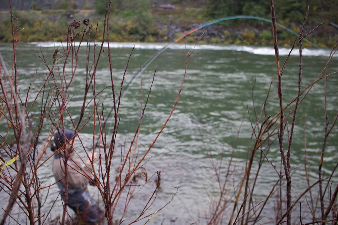 Green water and a deeply bent rod. What winter steelhead fishing is all about