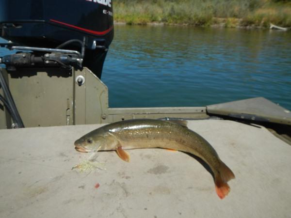 Fishing Report Image