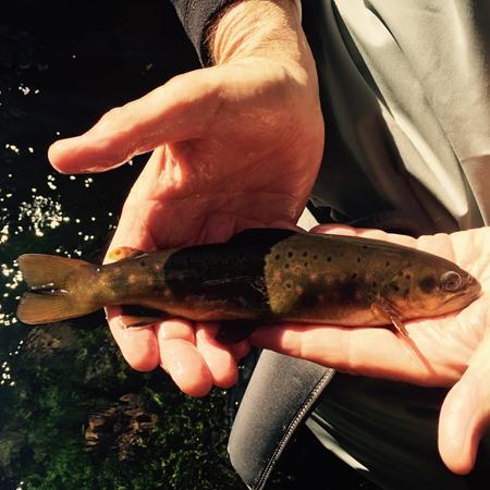 Pit River Fishing Image