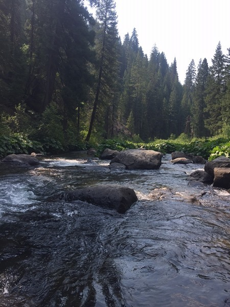 The beautiful, and somewhat cool, Upper McCloud River.