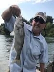 Lower Sac Stripers Fishing Image